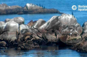 Monterey Bay. Monterey Webcams online