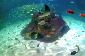 Florida Little Aquarium Encanters Webcam online
