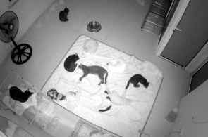 "Tierheim ""Hanoi Pet Rescue"" Webcam online"
