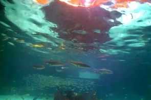 Aquarium Encanters Webcam online